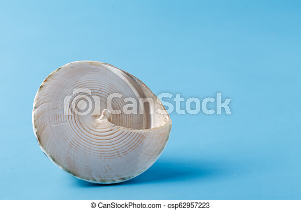Close up view of big sea shell on plain blue background - csp62957223