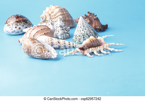 Close up view of big sea shell on plain blue background - csp62957242