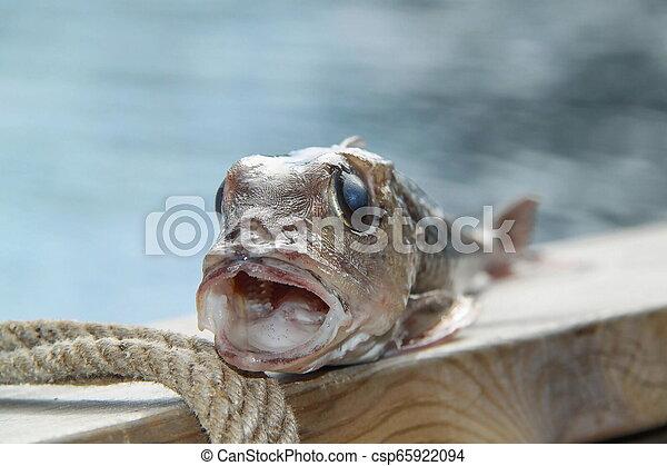Weird Fish Photos 2