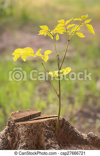 Close up young plant growing on tree stump - csp27666721