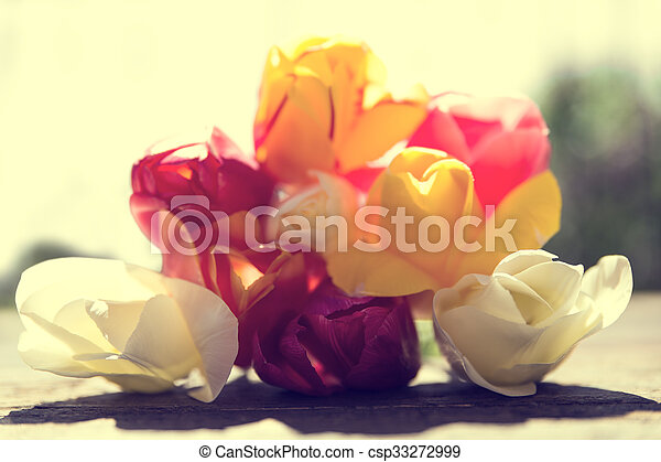 closeup from a bunch of tulips in the sunshine - csp33272999
