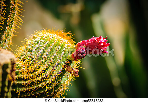 Closeup of a beautiful pink tender cactus flower and green thorny spiky plant closeup of a beautiful pink tender cactus flower and green thorny spiky plant mightylinksfo