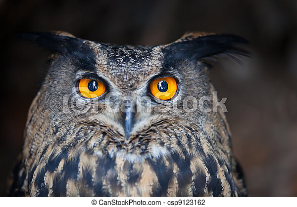 Closeup of a Eurasian Eagle-Owl (Bubo bubo) - csp9123162