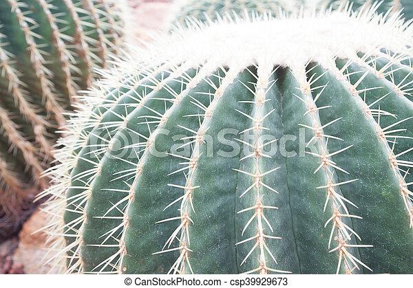 Closeup of cactus in the garden - csp39929673