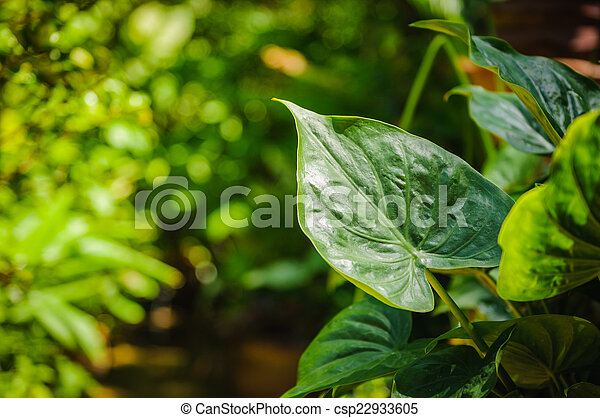 closeup of green leaf in the garden - csp22933605