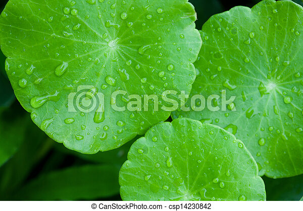 Closeup of green leaf with water drops - csp14230842