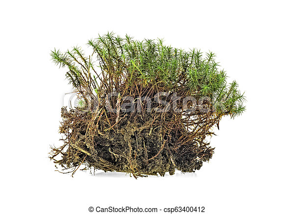 Closeup of green moss isolated on a white background - csp63400412