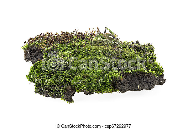Closeup of green moss isolated on a white background - csp67292977