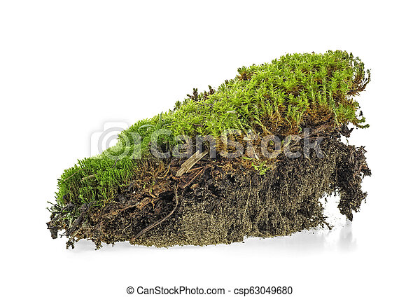 Closeup of green moss isolated on a white background - csp63049680