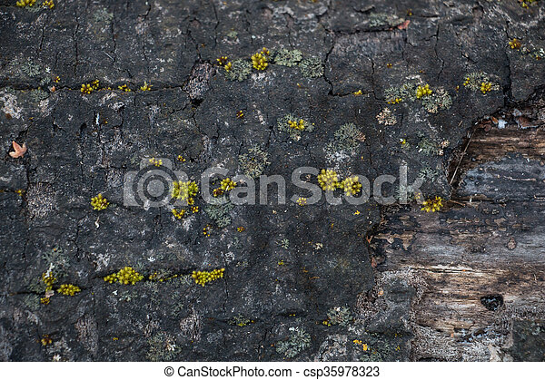 Closeup of old cut tree with fungus and moss. - csp35978323