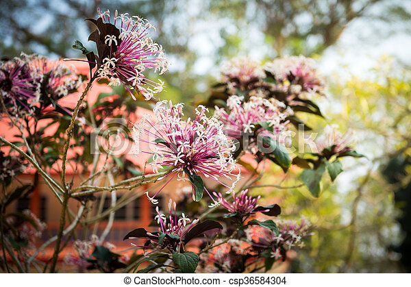 closeup of pink flower in the garde - csp36584304