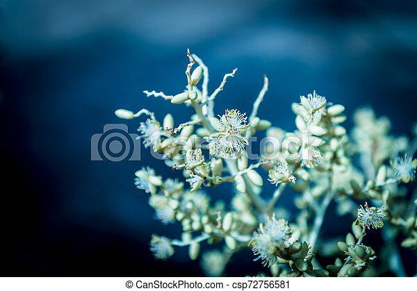 Closeup of small white flower in the garden - csp72756581