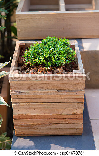 Closeup of wooden pot with green plant in garden - csp64678784