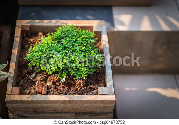 Closeup of wooden pot with green plant in garden - csp64678752