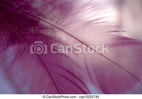 closeup pink feather - csp10220749