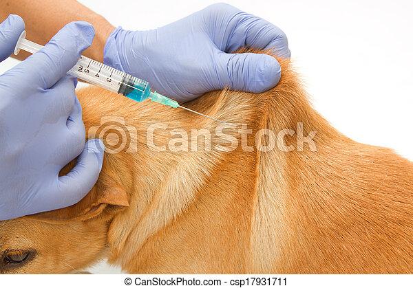 Closeup Vet giving injection the dog - csp17931711