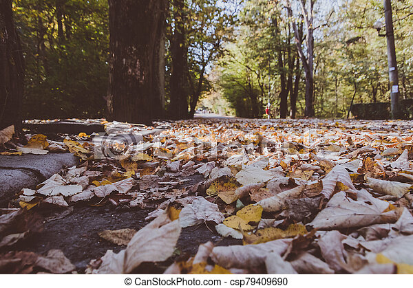Closeup view of autumn dead leaves in a forest - csp79409690