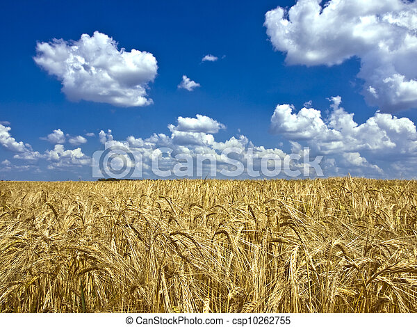 clouds over a field of barley - csp10262755