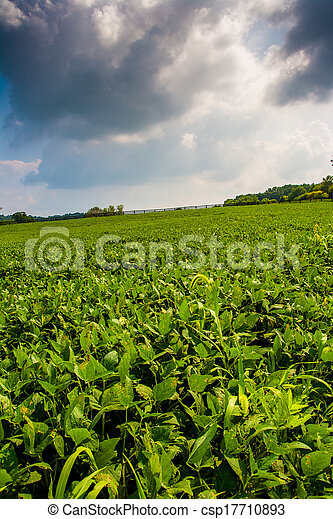 Clouds over farm fields in rural York County, Pennsylvania.  - csp17710893