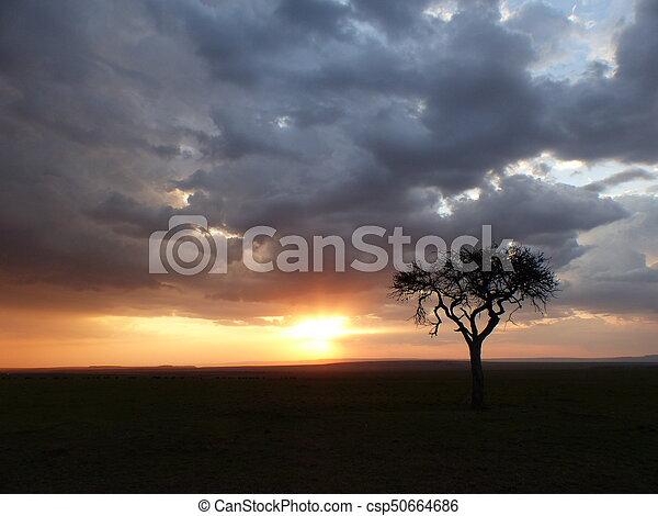 Cloudy sunset in the savannah - csp50664686