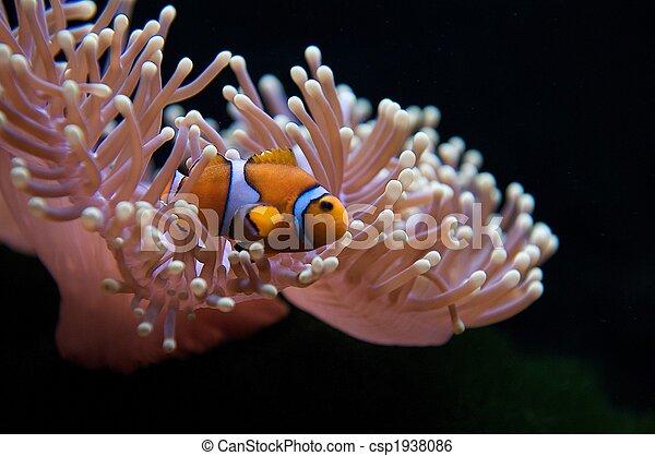 Pececitos y anémona - csp1938086