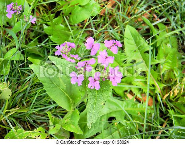 Cluster of pretty purple flowers cluster of tiny and pretty purple cluster of pretty purple flowers csp10138024 mightylinksfo