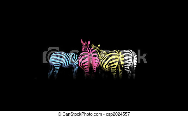 CMYK Colored Zebras - csp2024557