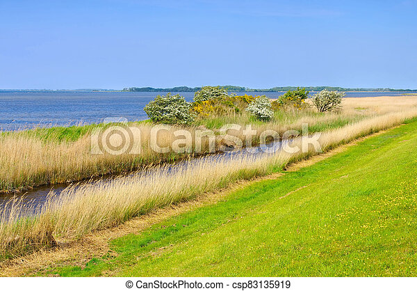 coast on island Ummanz in Germany - csp83135919