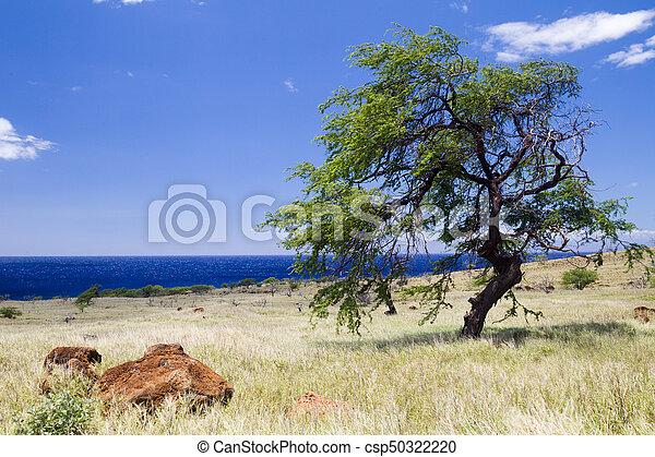 Coastal landscape on Big Island - csp50322220