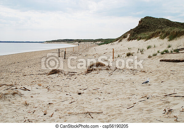 Coastal scene on Amrum, Germany - csp56190205