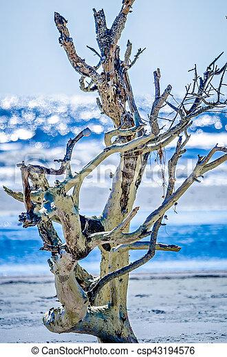coastal scenes around folly beach south carolina - csp43194576