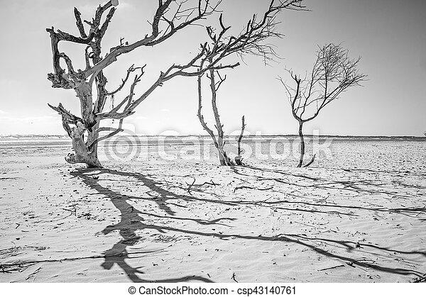 coastal scenes around folly beach south carolina - csp43140761