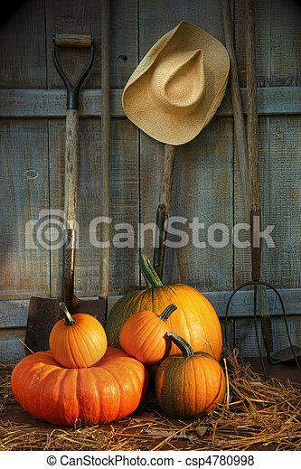 Herramientas de jardín en cobertizo con calabazas - csp4780998