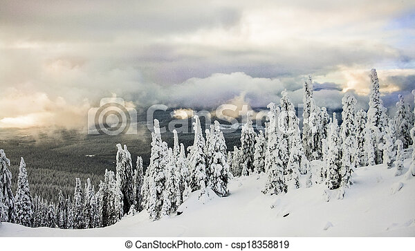 coberto, árvores inverno, neve - csp18358819