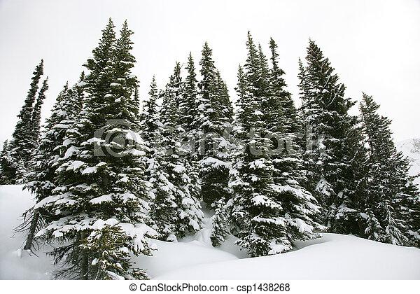 coberto, neve, pinho, árvores. - csp1438268