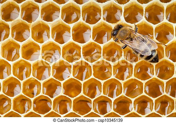 Bee macro toma recogiendo miel en panal - csp10345139