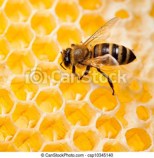 Bee macro toma recogiendo miel en panal - csp10345140