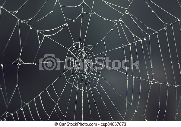 Cobweb - drops of morning dew on a spider web in fog - csp84667673
