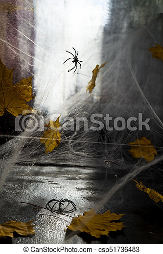 Cobweb or spider's web against a black background, - csp51736483