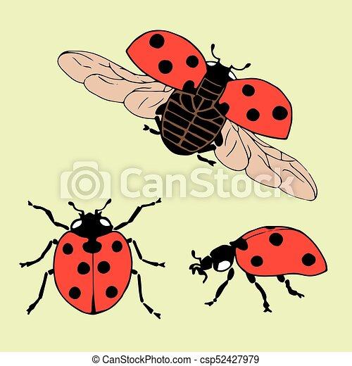 Coccinella Differente Set Positions Mano Vettore Ladybug