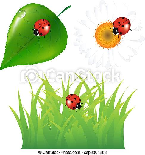 coccinella, set, verde - csp3861283