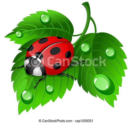 Coccinelle feuille illustration waterdrops - Dessin cocinelle ...