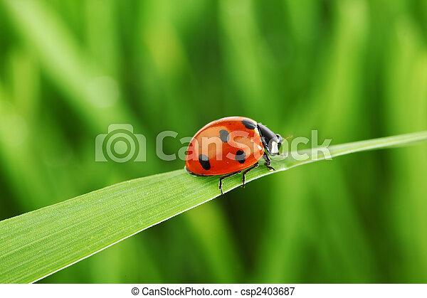 coccinelle, herbe - csp2403687
