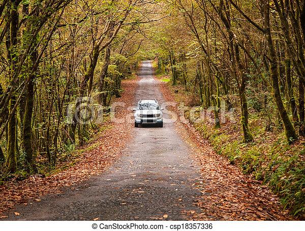 Un coche en un camino en el bosque - csp18357336