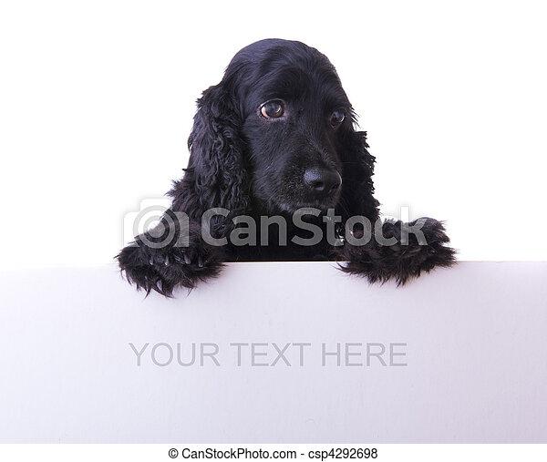 cocker spaniel dog - csp4292698