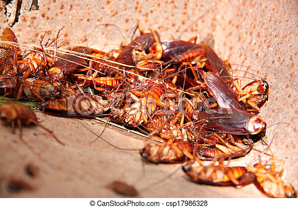 Cockroaches to dead and combination in bin. - csp17986328