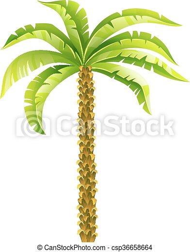 palmera de coco tropical con hojas verdes ilustración vectorial. Eps10 aislado en fondo blanco - csp36658664