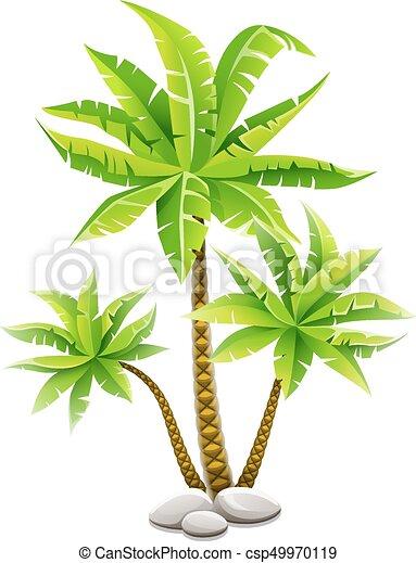 Palmeras tropicales de coco con hojas verdes - csp49970119