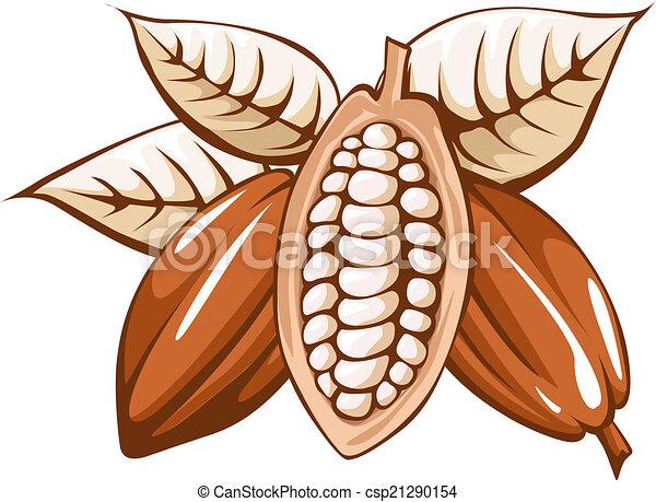 cocoa bean  - csp21290154