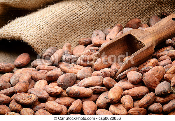 Cocoa beans and wooden scoop - csp8620856
